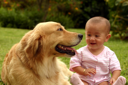 Golden Retriever and Baby